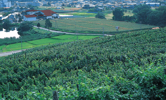 TAKEDA WINERY